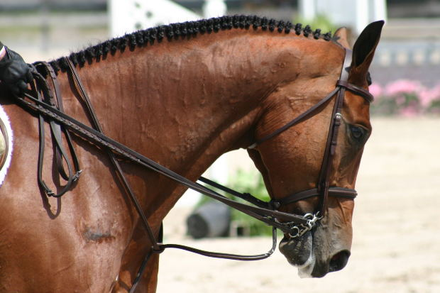 how to do hunter pairs at a horse show