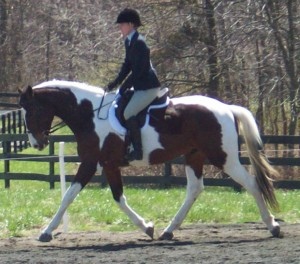 Hunter Judge Canada, Hunter Judge USA, Hunter Under Saddle, under saddle class, how to ride a hunter under saddle, win under saddle class