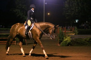 Hunter Under Saddle, Hunter Judge Canada, Hunter Judge USA, Show Ring Hunter, Show hunter Hunt Seat, what the judge is looking for